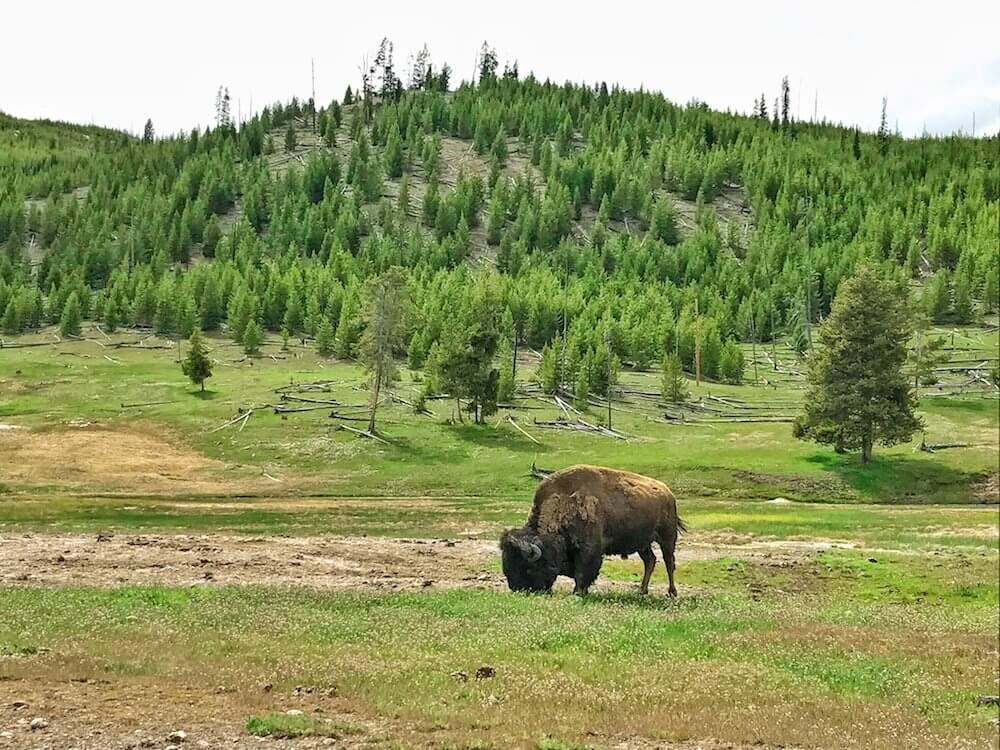 North Dakota nature