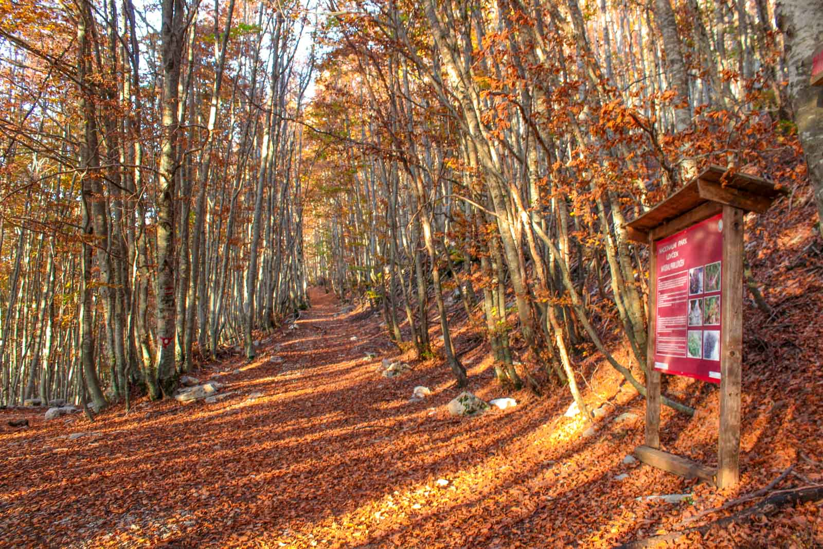 Lovcen National Park wolf trail