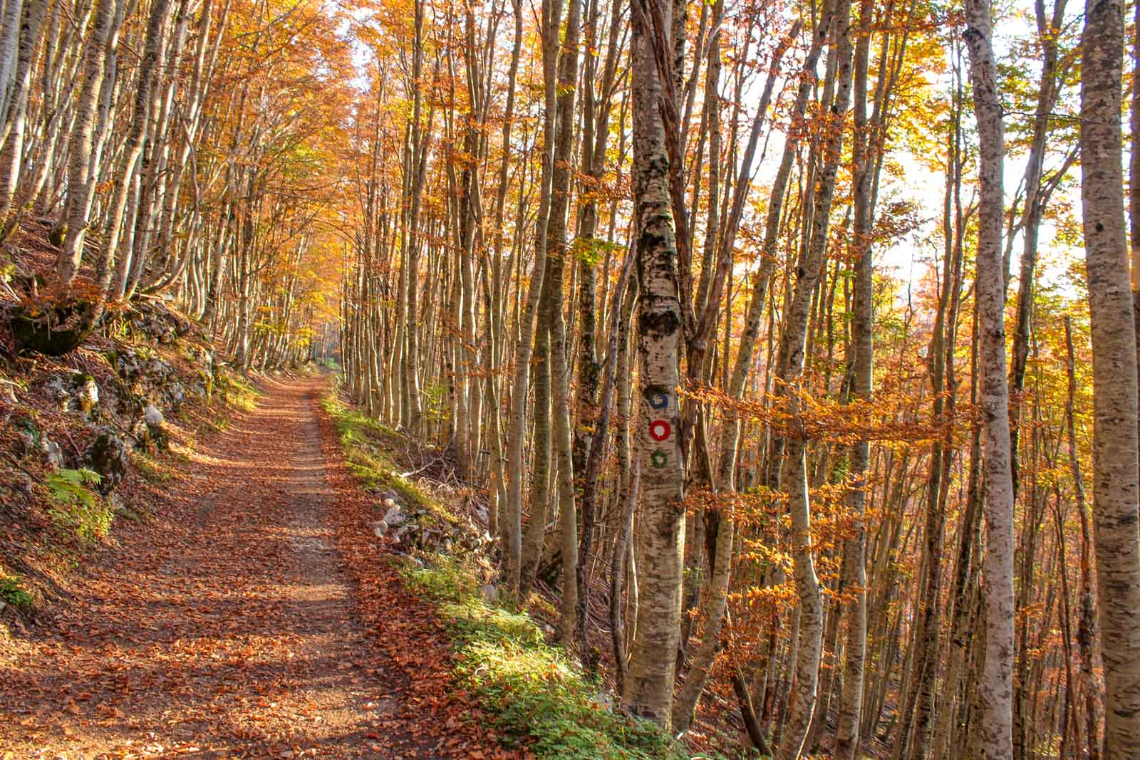 Wolf Trail, Lovcen National Park