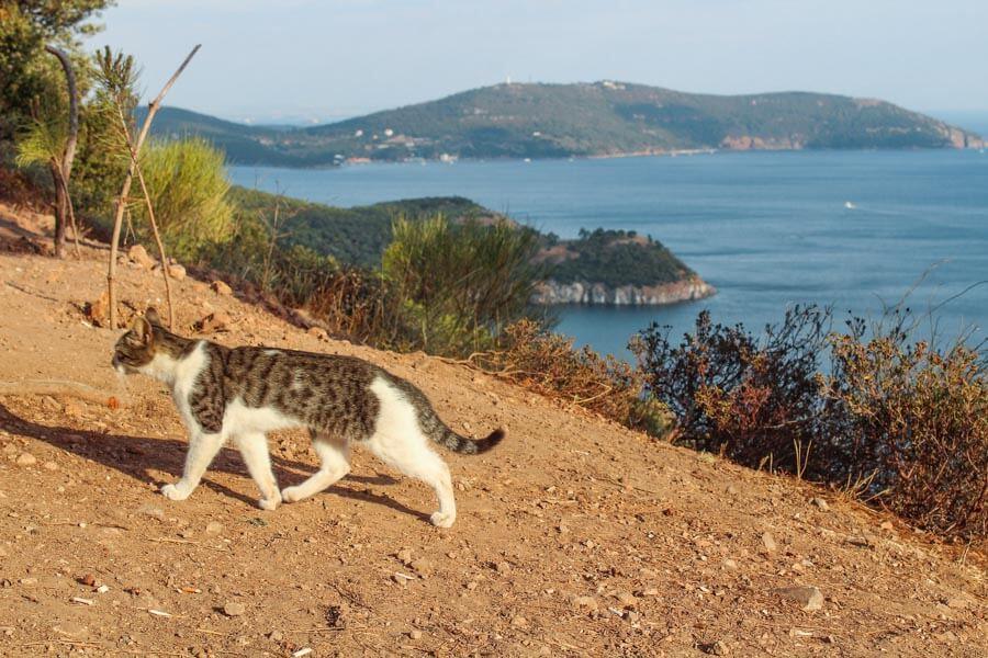 Burgaz island