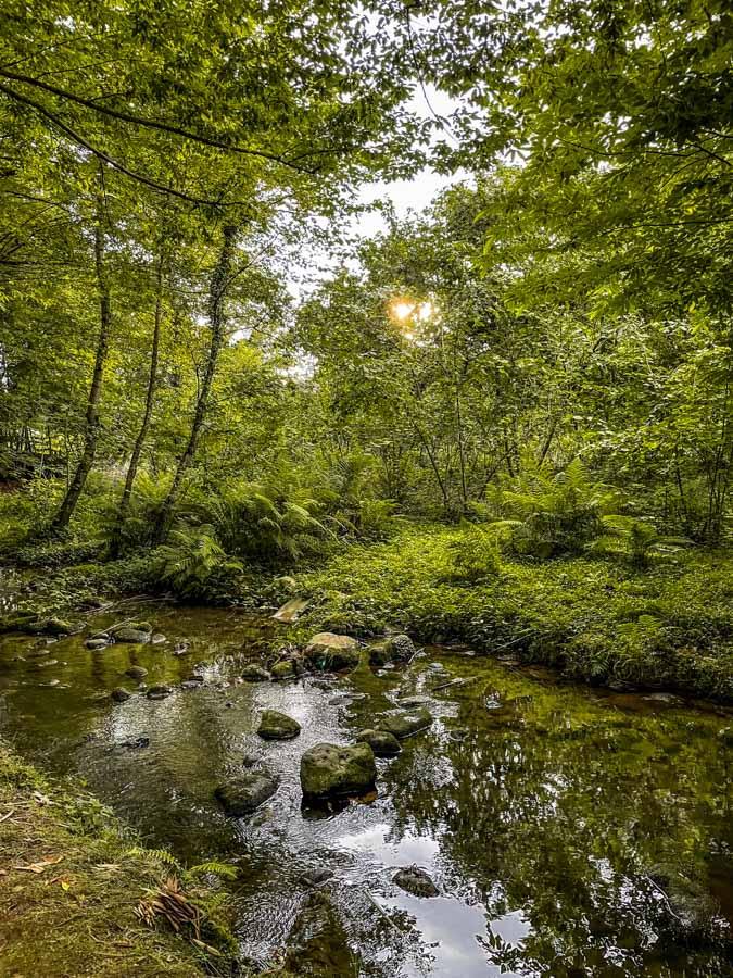 nature near Batumi