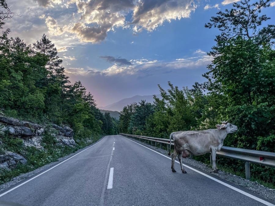 road trip in Georgia