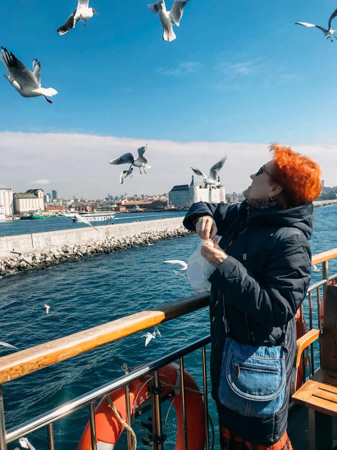 feeding seagulls in Istanbul