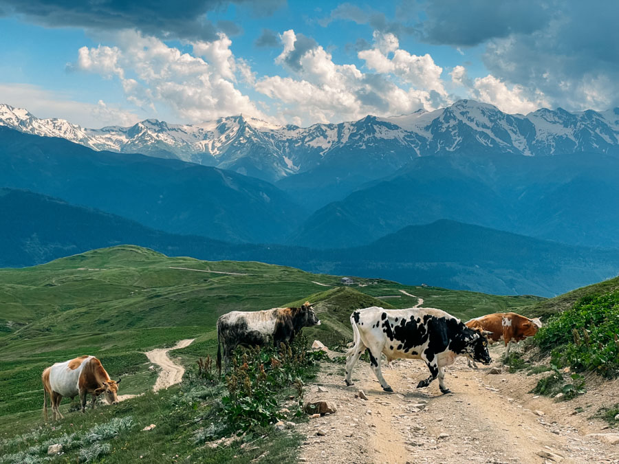 driving off road in Svaneti
